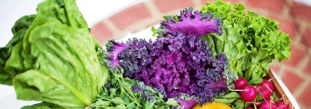 vegetables-790022_1280 (1)